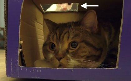 Jeden karton, dwa koty. Jest problem