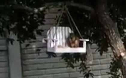 Wiewi�rka, kt�ra lubi buja� w ob�okach