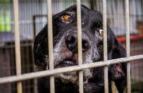Sroga kara za okrucie�stwo wobec zwierz�t