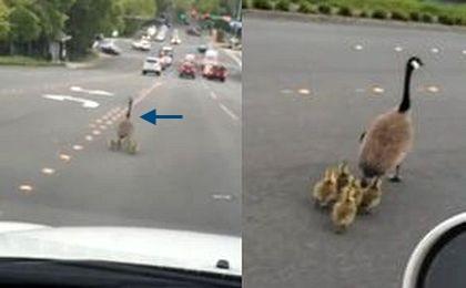 Mama z małymi na drodze. Zabawna reakcja kierowcy