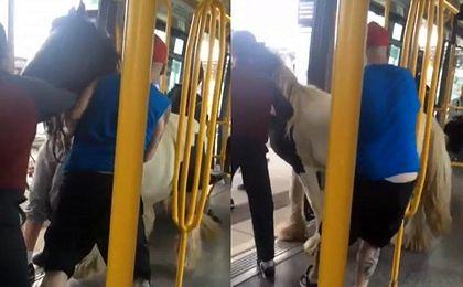 Nietypowy pasażer. Interwencja motorniczego