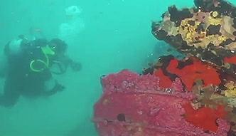 Niezwykłe znalezisko na dnie morza