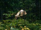 Tajemnicze konstrukcje w lesie. Do czego s�u��?