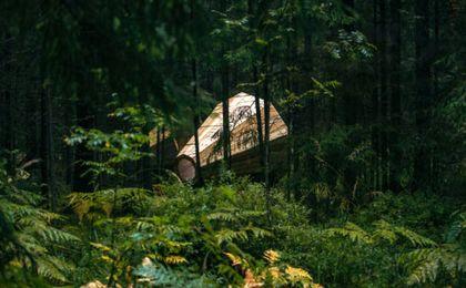 Tajemnicze konstrukcje w lesie. Do czego służą?