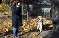 Zatrudnili bezdomne psy