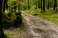 Mieszkaniec Wa�brzycha znalaz� w lesie w�r monet
