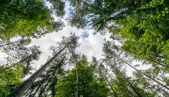 Polskie lasy w liczbach