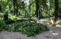 Sobotnia wichura po�ama�a drzewa w Starym Zoo w Poznaniu. Ogr�d ca�y czas jest zamkni�ty