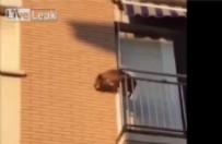 Zamkn�li psa w upa� bez wody na balkonie. Zdesperowane zwierz� wyskoczy�o