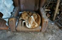Kostka - pies, kt�ry kona� z g�odu na fotelu w szopie. W�a�ciciel zwierzaka us�ysza� wyrok
