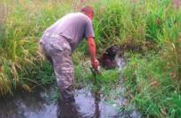 Podlasie: trwaj� poszukiwania cz�owieka, kt�ry przywi�za� psa do pnia na �rodku rozlewiska