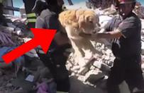 Pies uratowany 9 dni po trz�sieniu ziemi we W�oszech