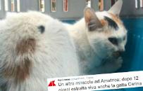 Uratowano kotk�, kt�ra sp�dzi�a 12 dni pod gruzami po trz�sieniu ziemi we W�oszech