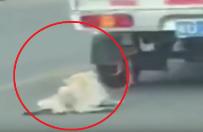 Pies by� przywi�zany do samochodu i ci�gni�ty po drodze. Uwaga: drastyczne zdj�cia