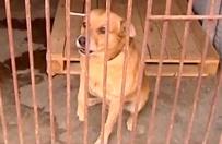 Psa i jego w�a�ciciela brutalnie rozdzieli� los. M�czyzna trafi� do Domu Pomocy Spo�ecznej, a jego pies do schroniska