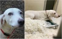 Tego psa nie da si� adoptowa�. 11 razy wraca� do schroniska