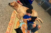 Autystyczny ch�opiec po raz pierwszy w �yciu daje si� dotkn�� psu-terapeucie