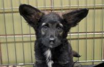 Jedyne takie uszy na świecie! Pies o wyjątkowej urodzie czeka na adopcję