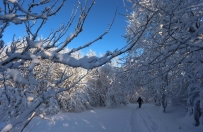Polska pogoda w styczniu