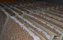 Dolnośląskie: Służby rozbiły grupę przestępczą przemycającą wyroby tytoniowe