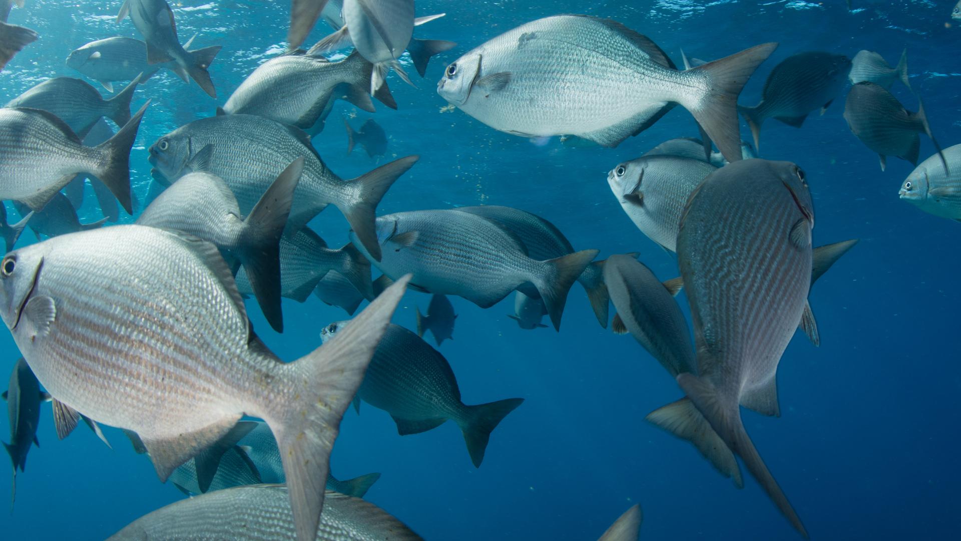 Toksyczne ryby. Unikaj ich w swojej diecie