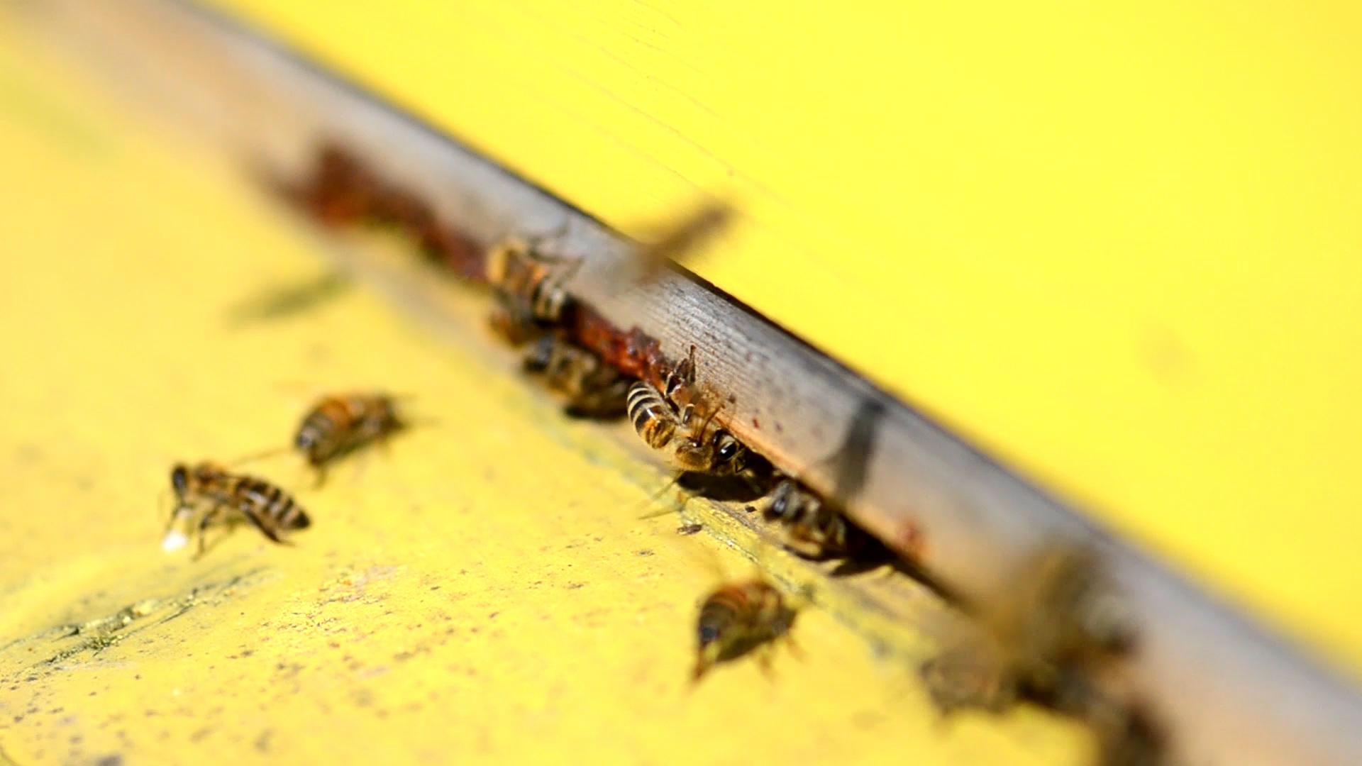 Zapachy, które odstraszą pszczoły i osy