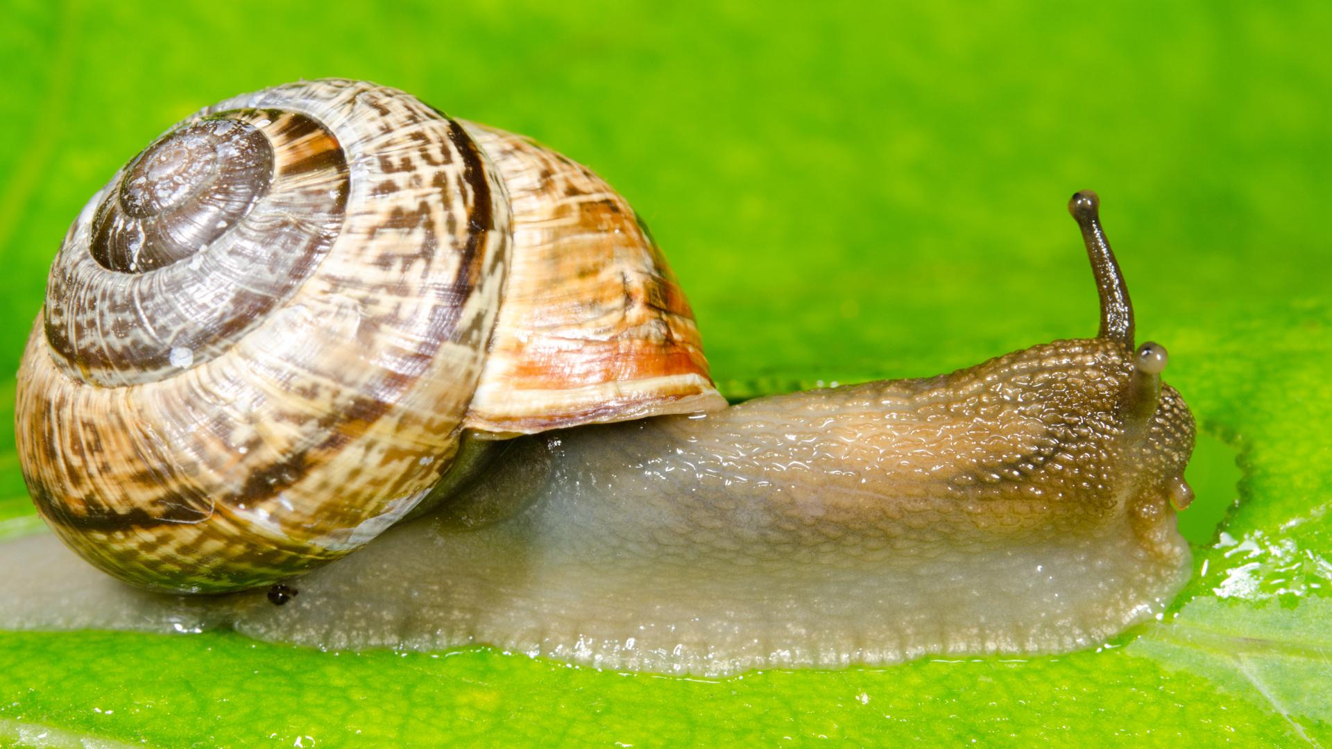 Domowe sposoby na pozbycie się ślimaków
