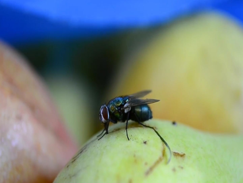 Co odstrasza muchy? Jakie zapachy działają najlepiej