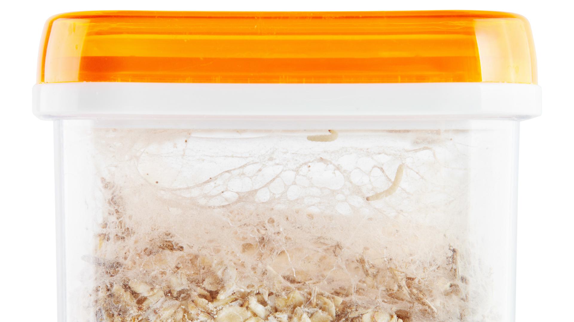 Jak się pozbyć moli spożywczych?