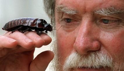Plaga gigantycznych karaluch�w zagra�a Florydzie