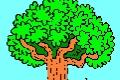 Jakie to drzewo?