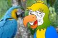 Rysowanie papugi