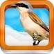 Atlas ptaków dla dzieci