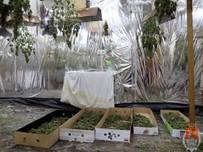 Plantacja marihuany w zakładzie pogrzebowym