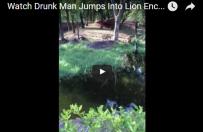 Pijany wskoczy� na wybieg dla lw�w…przywita� si�
