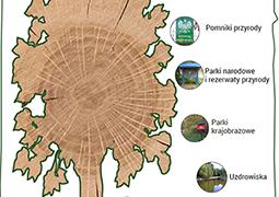Wycinka drzew. Oto metody, by powstrzymać piły łańcuchowe