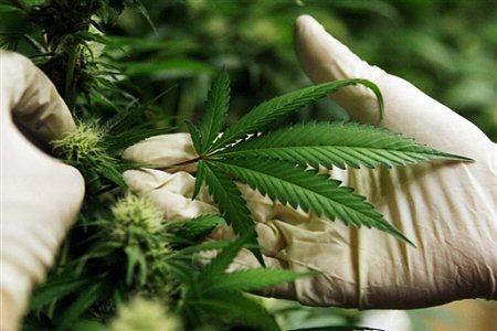marihuana_afp_450.jpeg