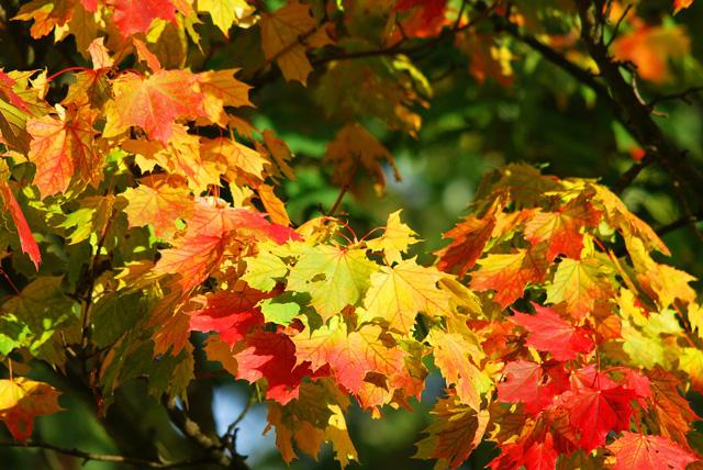 Rozpoczyna się astronomiczna jesień