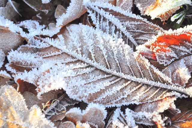 Prognoza pogody na sezon zimowy